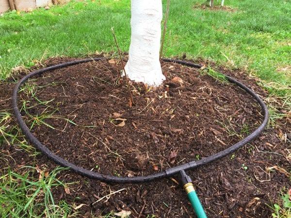 Tree Soaker Hose Kit